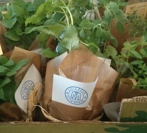 צמחי תבלין בתוך ארגז, לכל אחד חותמת מנל גיוון